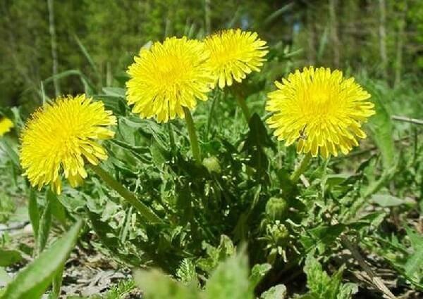травы для роста и красоты волос